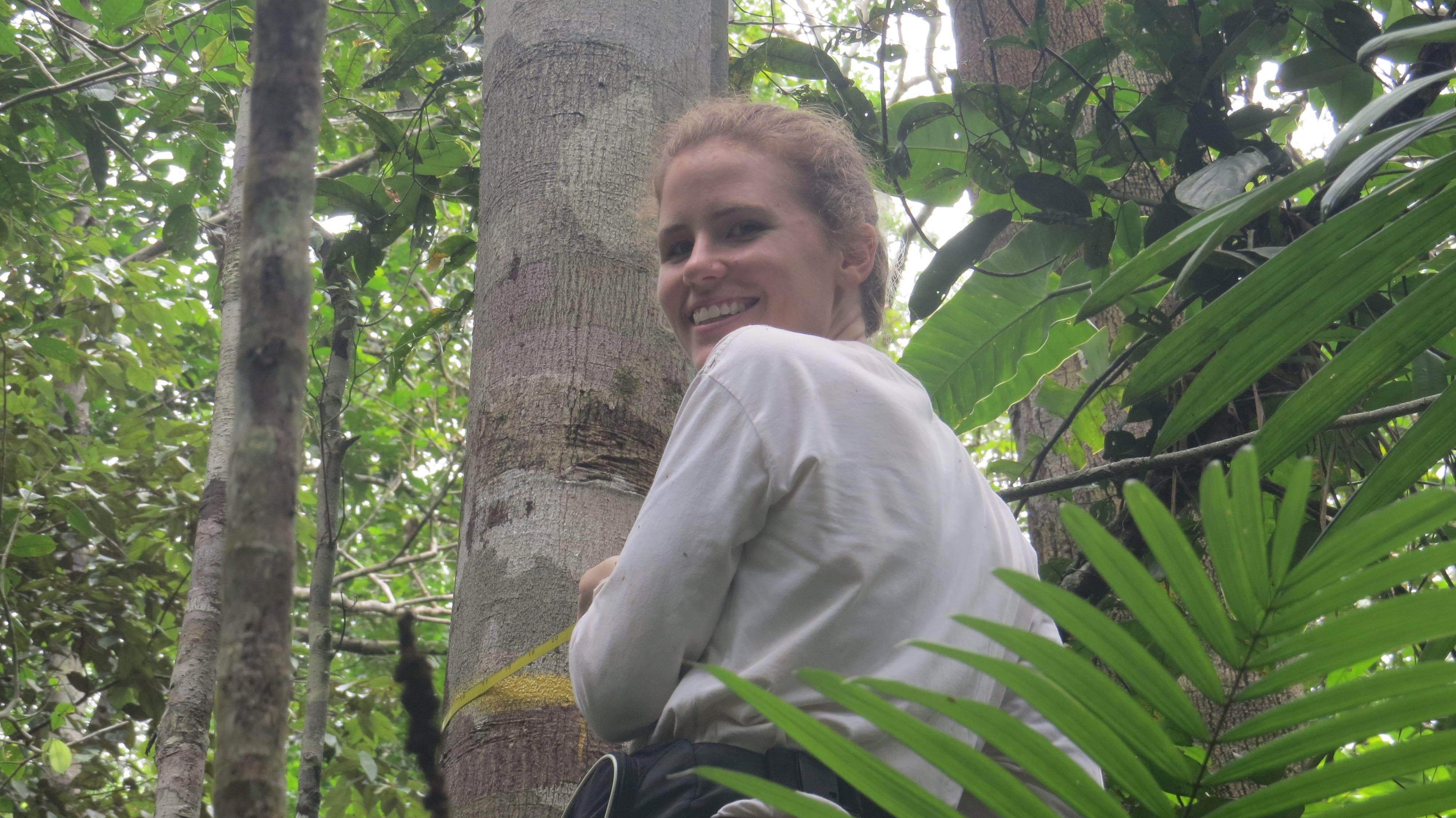 aem_measuring_trees_small